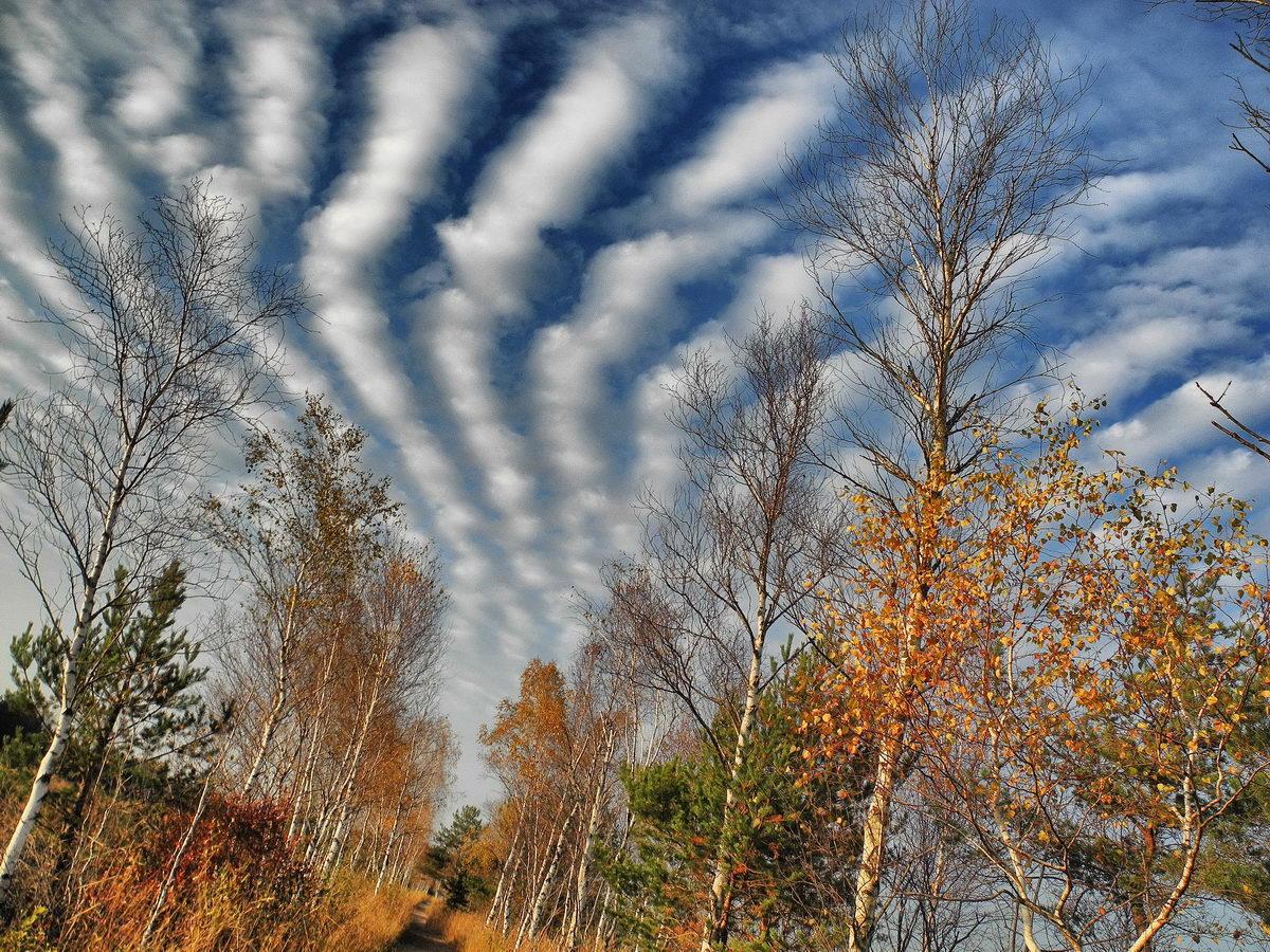 Wolken über dem Schönramer Filz